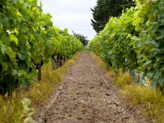 Weingeschäft in Essen, Viticcio