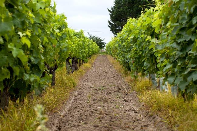 Wein, die Harmonielehre des guten Geschmacks