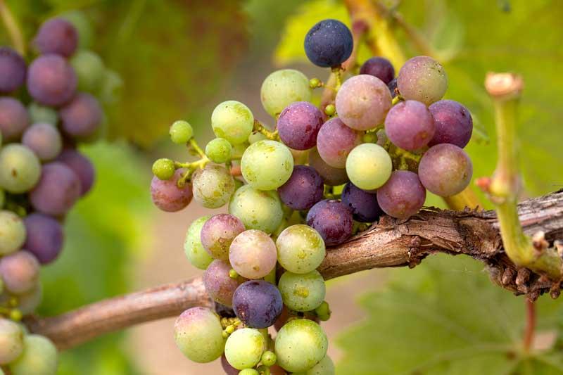 Der Tag des offenen Weines in Essen